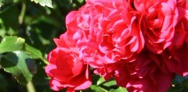 Gartentätigkeiten | Gerade Woche